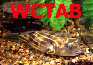 61Tetraodon fahaka WCTAB-FINISH