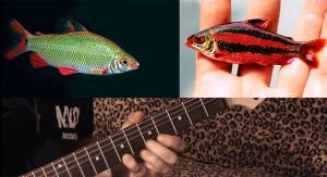 Afr. Aquarium Blues 2