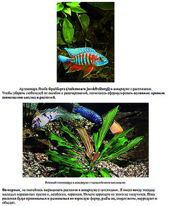 Cichlids and waterplants 2020