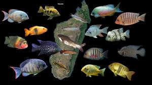Madagascar Cichlids 2020 2 ed