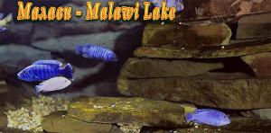 Malawi breeding list 1