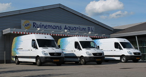 Ruinemans aquarium 6