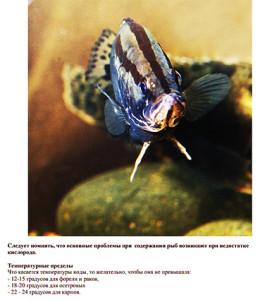 Fish large 2020 1