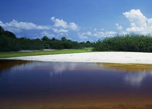 Amano freshwater biotop 2020