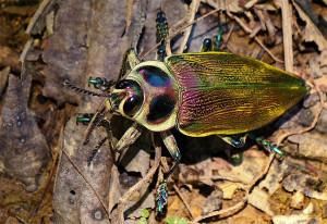 Butterfly - pedromapiposa 2020 nov 15