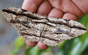 Butterfly - pedromapiposa 2020 nov 19