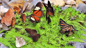 Butterfly - pedromapiposa 2020 nov 2
