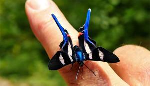 Butterfly - pedromapiposa 2020 nov 21