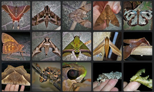 Butterfly - pedromapiposa 2020 nov 22
