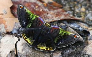 Butterfly - pedromapiposa 2020 nov