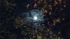 Moon 2020