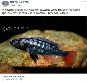 Rare African Cichlids 2020 2 ed
