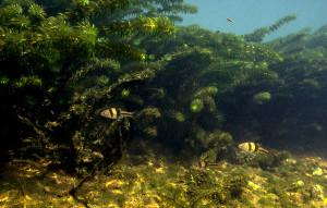 Амано биотоп 2021
