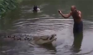 Крокодил почо 2021 1