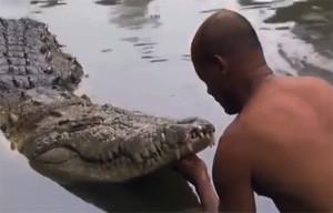 Крокодил почо 2021