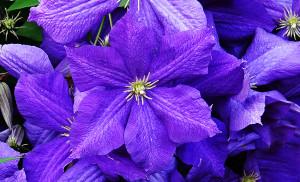 Дача 14 августа 2021 цветы 2