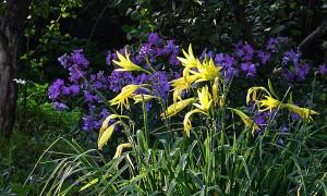 Дача 14 августа 2021 цветы 5