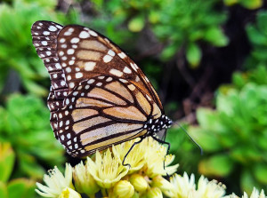 Аня-бабочка 8 октября 2021 ув