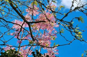 Аня цветы 10 октября ув