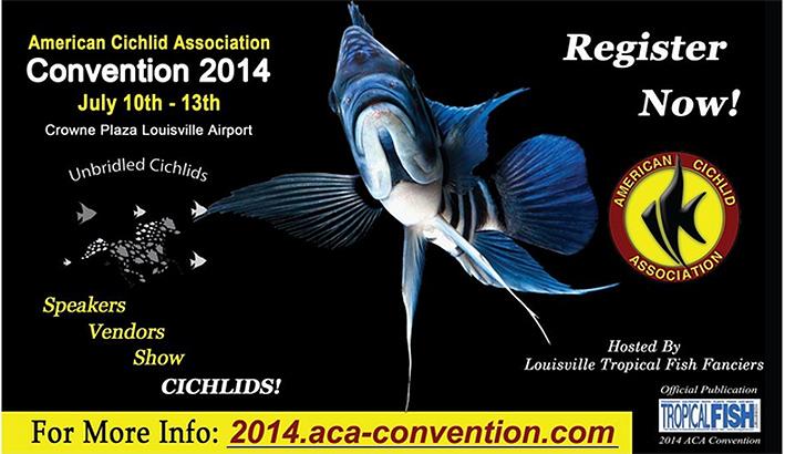 aca-convention-july-2014.jpg