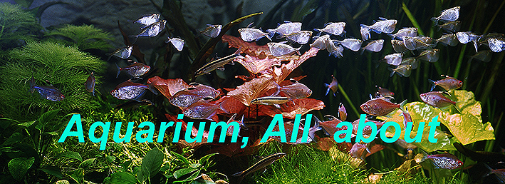 aquarium-all-about-200.jpg