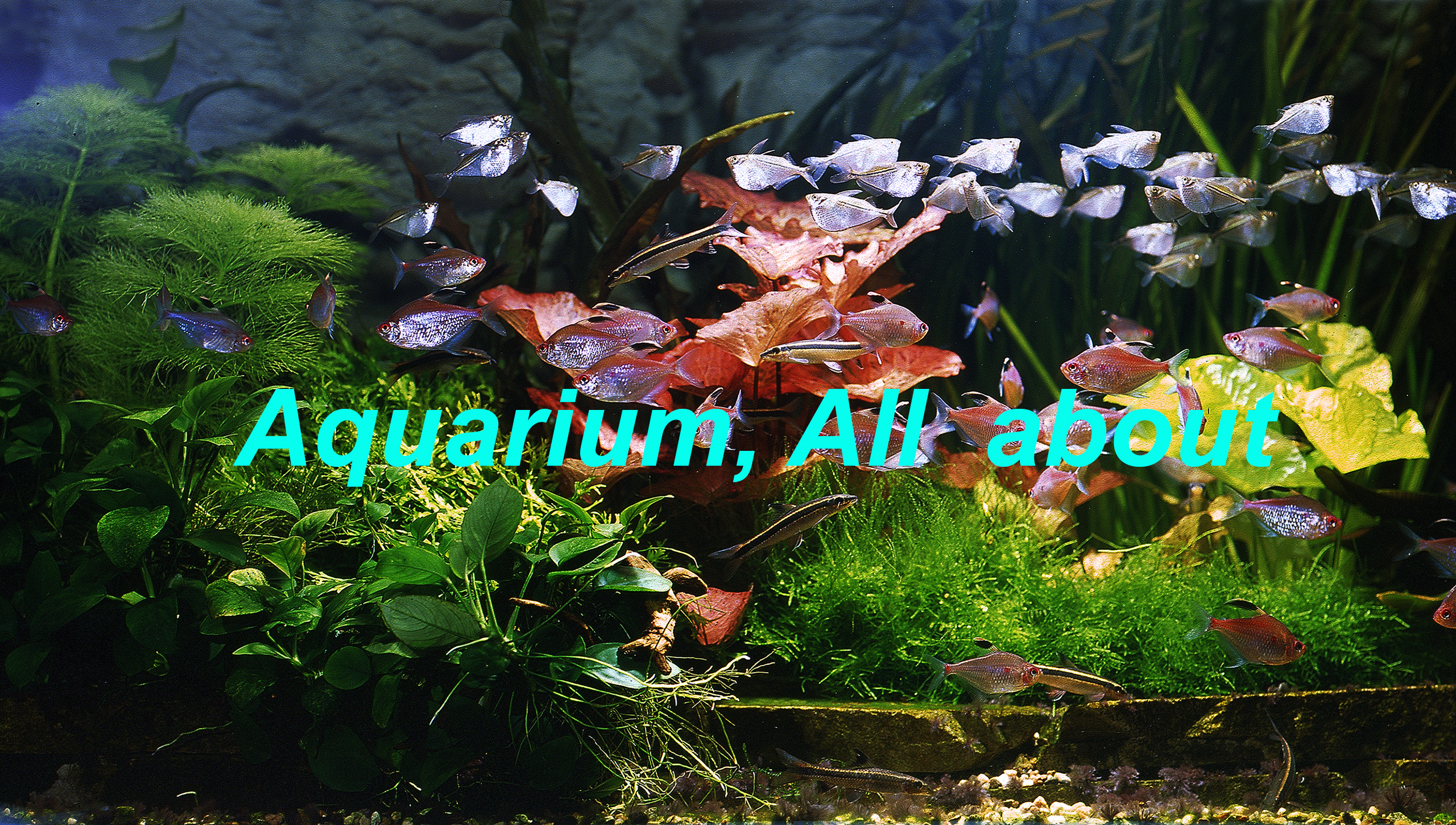 aquarium-all-about.jpg