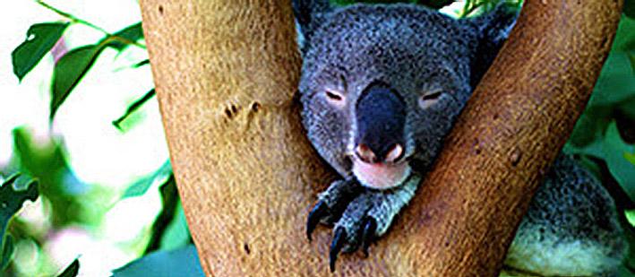 australia-bear-re.jpg