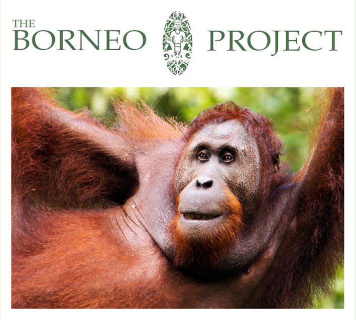 borneo-project-24-2015.jpg
