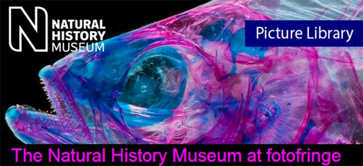 british-museum-phohtofringe-22-may-2014.jpg
