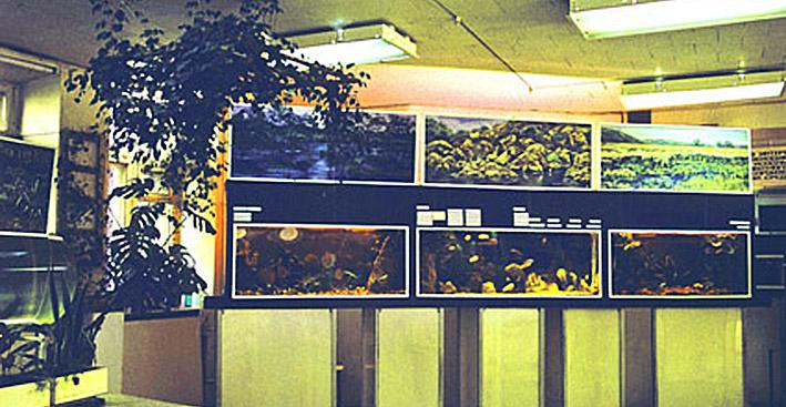 cichlids-show-1986-re-1.jpg