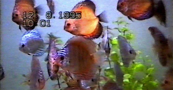 cyprus-fishery-2-re.jpg