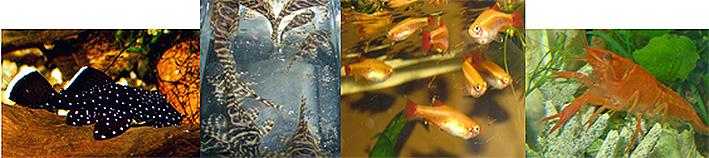 hannover-aquaristic-2014.jpg