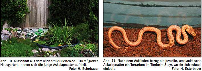 hans-esterbauer-zamensis-2014-1.jpg