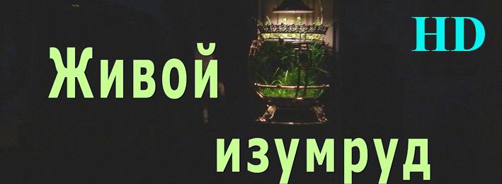 live-emerald-hd.jpg