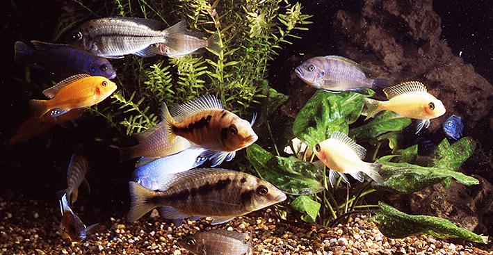 malawi-aquarium.jpg