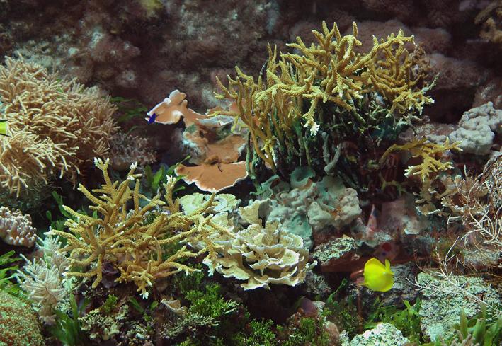 marine-aquarium-16-years.jpg