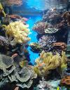 marine-aquarium-inside-2012.jpg