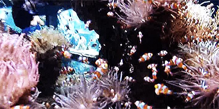 monaco-aquarium.jpg