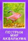 Пестрый мир аквариума. Харациновидные. Выпуск 6.