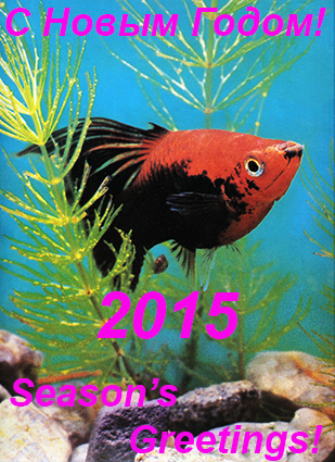 seasons-greet-2015.jpg