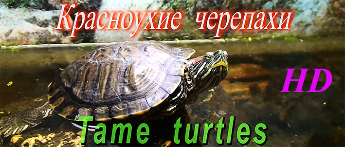 tame-turtles.jpg