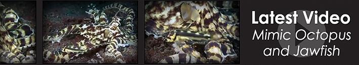 tfh-2012-febr-octopus-video.jpg