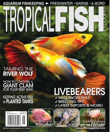 tfh-2013-cover.jpg