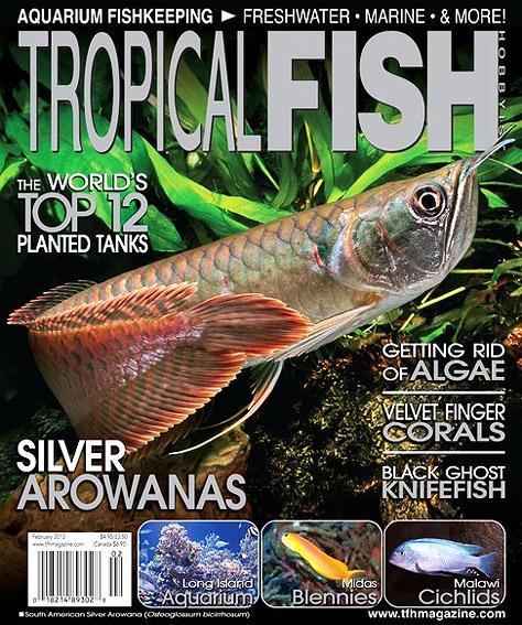 tfh-february-2013-cover.jpg