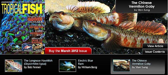tfh-march-2012.jpg