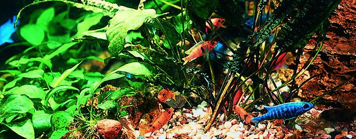 waterplants-malawi-re.jpg